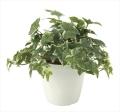 光触媒 光の楽園フレッシュ斑入りアイビ-【インテリアグリーン 人工観葉植物】(645a50)