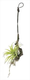 光触媒 光の楽園エアープランツS【インテリアグリーン 人工観葉植物】(648a40)