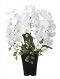 光触媒 光の楽園プリンセス胡蝶蘭W【アートフラワー 造花 】(662a50)