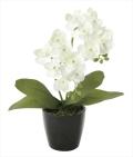 光触媒 光の楽園ミニオーキットW【アートフラワー 造花 】(706a20)
