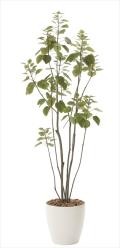 光触媒 光の楽園フィカスブランチツリー 高さ 1.7m【インテリアグリーン 大型 人工観葉植物】(718a250)