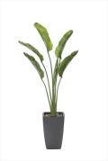 光触媒 光の楽園オーガスタ 高さ 1.8m【インテリアグリーン 大型 人工観葉植物】(800a600)