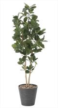 光触媒 光の楽園パンの木 高さ 1.6m【インテリアグリーン 大型 人工観葉植物】(815a320)