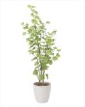 光触媒 光の楽園バウヒニア 高さ 1.6m【インテリアグリーン 大型 人工観葉植物】(820a300)
