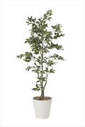 光触媒 光の楽園フィカスツリー 高さ 1.8m【インテリアグリーン 大型 人工観葉植物】(822a380)