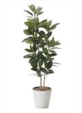 光触媒 光の楽園ゴムの木 高さ 1.6m【インテリアグリーン 大型 人工観葉植物】(824a320)