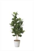 光触媒 光の楽園カシワバゴム 高さ 1.6m【インテリアグリーン 大型 人工観葉植物】(825a380)