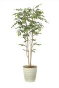 光触媒 光の楽園マウンテンアッシュ1.8m【インテリアグリーン 人工観葉植物】(900a360)