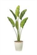 <光触媒加工なし>光の楽園オーガスタL1.8m【インテリアグリーン 人工観葉植物】(902a360)