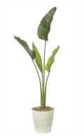 <光触媒加工なし>光の楽園オーガスタM 高さ 1.6m【インテリアグリーン 大型 人工観葉植物】(903a250)