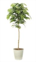 光触媒 光の楽園ケヤキ 高さ 1.6m【インテリアグリーン 大型 人工観葉植物】(904a330)