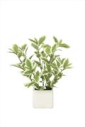 光触媒 光の楽園ミニリーフG/W【インテリアグリーン 人工観葉植物】(935a25)