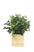 光触媒 光の楽園ウッドボックスK【インテリアグリーン 人工観葉植物】(※ラッピング不可)(937a150)