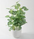 光触媒 光の楽園ミニカラジュームポット【インテリアグリーン 人工観葉植物】(accr25)