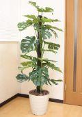 光触媒 光の楽園モンステラ1.5m【インテリアグリーン 人工観葉植物】(acn076)