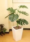 光触媒 光の楽園モンステラW100【インテリアグリーン 人工観葉植物】(acn080)