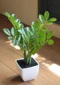 光触媒 光の楽園ザミフォリアポット【インテリアグリーン 人工観葉植物】(acn105)