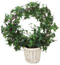 光触媒 光の楽園リングアイビー【インテリアグリーン 人工観葉植物】(acn133)