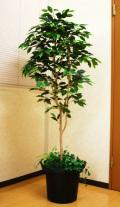 光触媒 光の楽園 ベンジャミン1.6m【インテリアグリーン 人工観葉植物】(acn176)