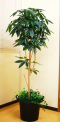 光触媒 光の楽園 パキラツリー 高さ 1.6m【インテリアグリーン 大型 人工観葉植物】(acn178)