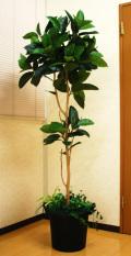 光触媒 光の楽園 ゴムの木1.8m【インテリアグリーン 人工観葉植物】(acn179)