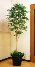光触媒 光の楽園 トネリコ1.8m【インテリアグリーン 人工観葉植物】(acn181)