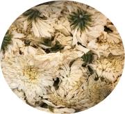 極品-黄山菊花(10個)