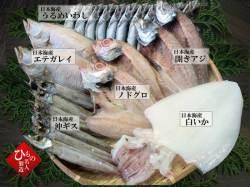 干物(ひもの)昴-12尾詰合 【送料無料】※東北・北海道・沖縄は送料520円をお願いします。