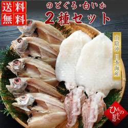 干物(ひもの)詰合 山陰名産 のどぐろ(あかむつ)・白いか(ケンサキイカ)詰合 【送料無料】※東北・北海道・沖縄は送料520円をお願いします。