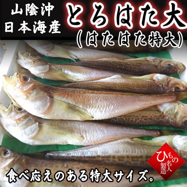干物(単品)とろはた大(はたはた・特大) 山陰沖日本海産(鳥取県・島根県産)