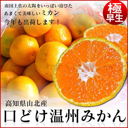 高知県産ワケあり山北みかん 2.5kg・サイズおまかせ