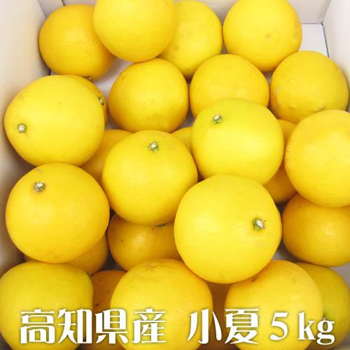 高知特産 小夏 【5kg】贈答用 ひろめ市場から直送