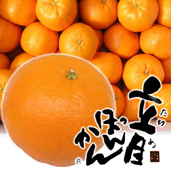 高知県産 立目ぽんかん 5kg・サイズおまかせ(ワケあり)