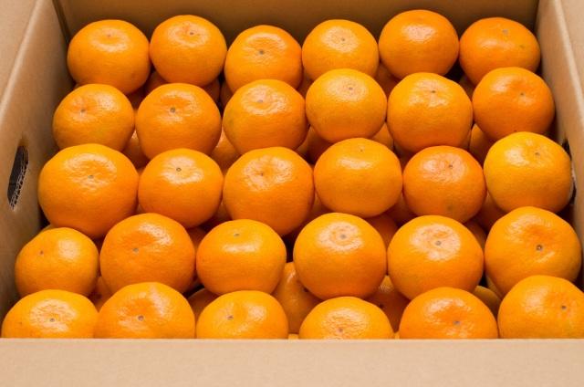 かねひろの「黒酢みかん10kg」ふるさと納税みんなが選ぶ果物ランキング1位を獲得したみかんです!