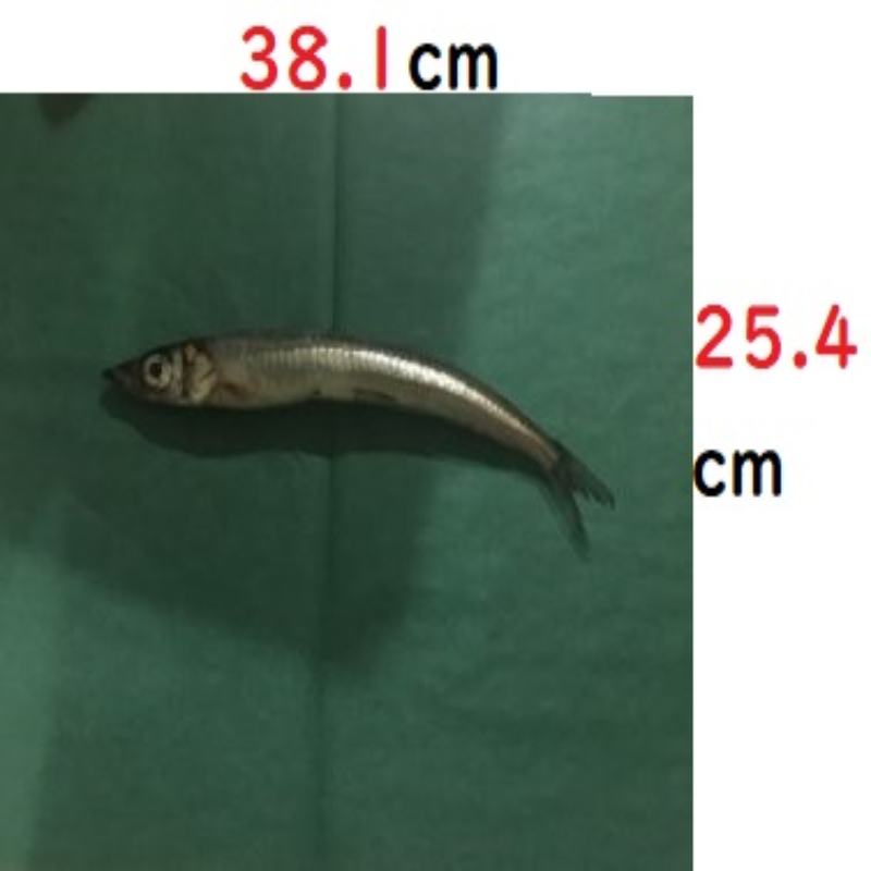 魚を包む緑の紙