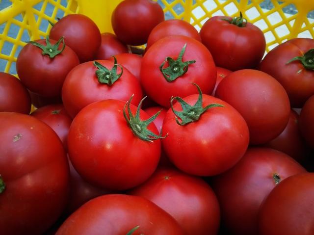 たかだ畑 完熟採り ぜいたくトマト 1.5kg