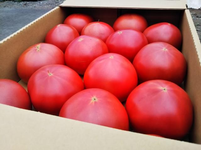 たかだ畑 完熟採りトマト 桃太郎ヨーク 2kg(8玉~12玉)