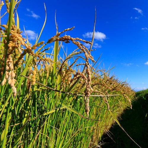 たかすタロファーム 特別栽培米 ななつぼし 10kg