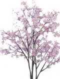 花御堂 桜 ツリーアップ