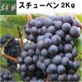 【津軽ぶどう村 スチューベン 2kg(5~9房)】 ■取扱期間:~2月末まで 送料込み・産地直送 青森