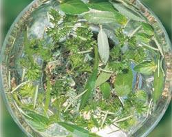グリーン・エッセンス Green Essence/オーストラリア・ブッシュ・フラワーエッセンス
