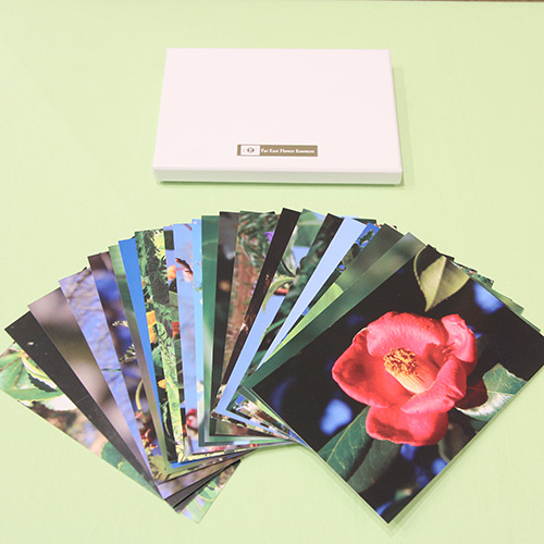 FE2)花写真カードボックス ファー イースト フラワーエッセンス ホメオパシージャパン