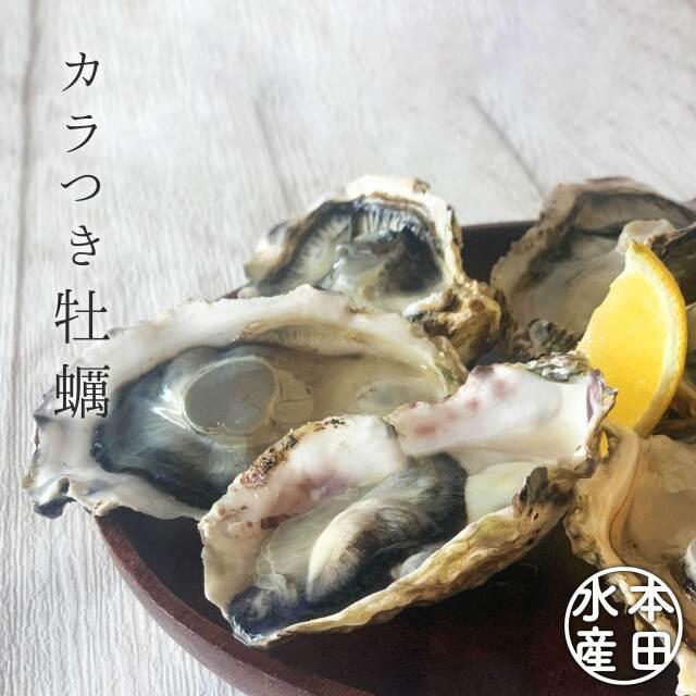 みやぎの海、広がる◆冷凍殻つき牡蠣_加熱用【アイディアごはんで楽しくおいしく】本田水産