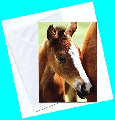 フランス製★キュートな仔馬☆のグリーティングカード