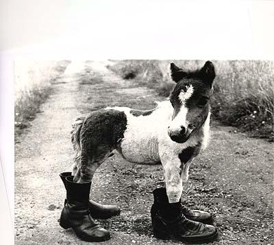 キュート過ぎる!?ポニーのグリーティングカード「長靴を履いたポニー」