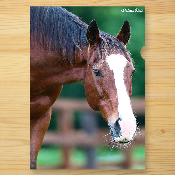 <引退馬協会>クリアファイル 「メイショウドトウ」2