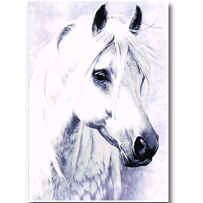 ポストカード「Moon Shadow」月の馬