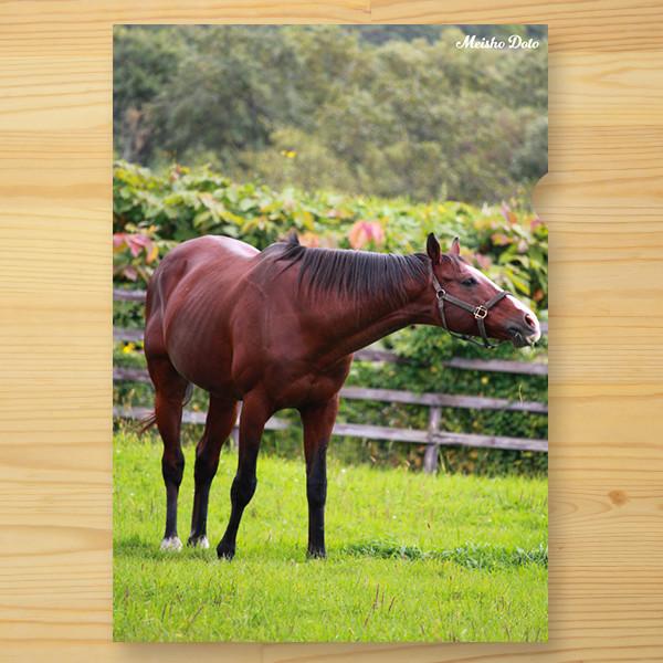 <引退馬協会>クリアファイル「メイショウドトウ」