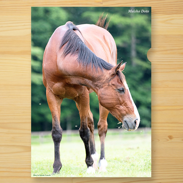 【予約】<引退馬協会>クリアファイル 「メイショウドトウ」3