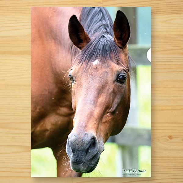 【予約】<引退馬協会>クリアファイル 「タイキフォーチュン」